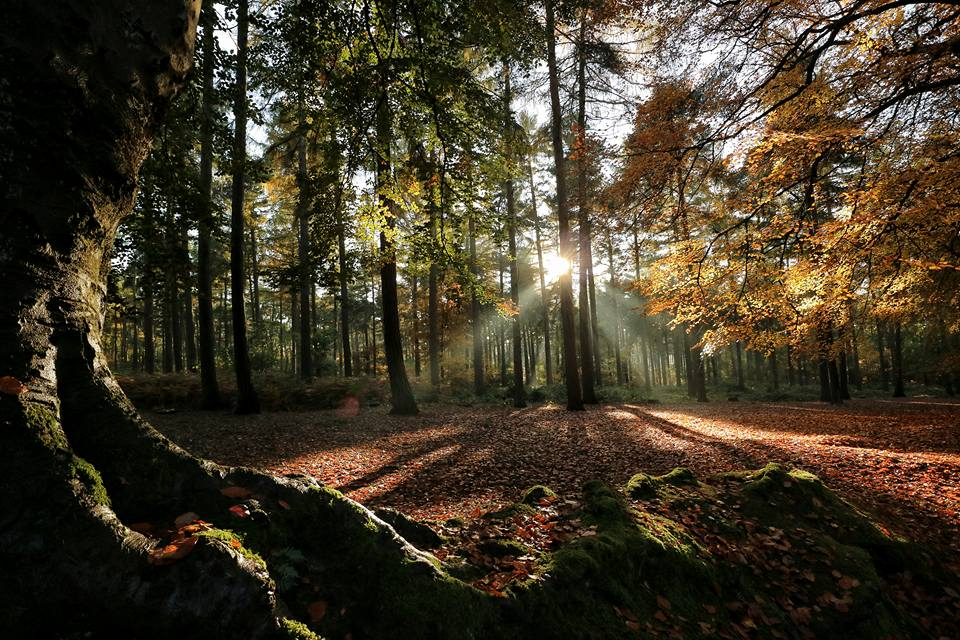 Image result for autumn walks northamptonshire
