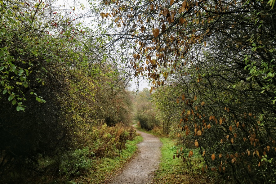 A path heading through trees and high hedges